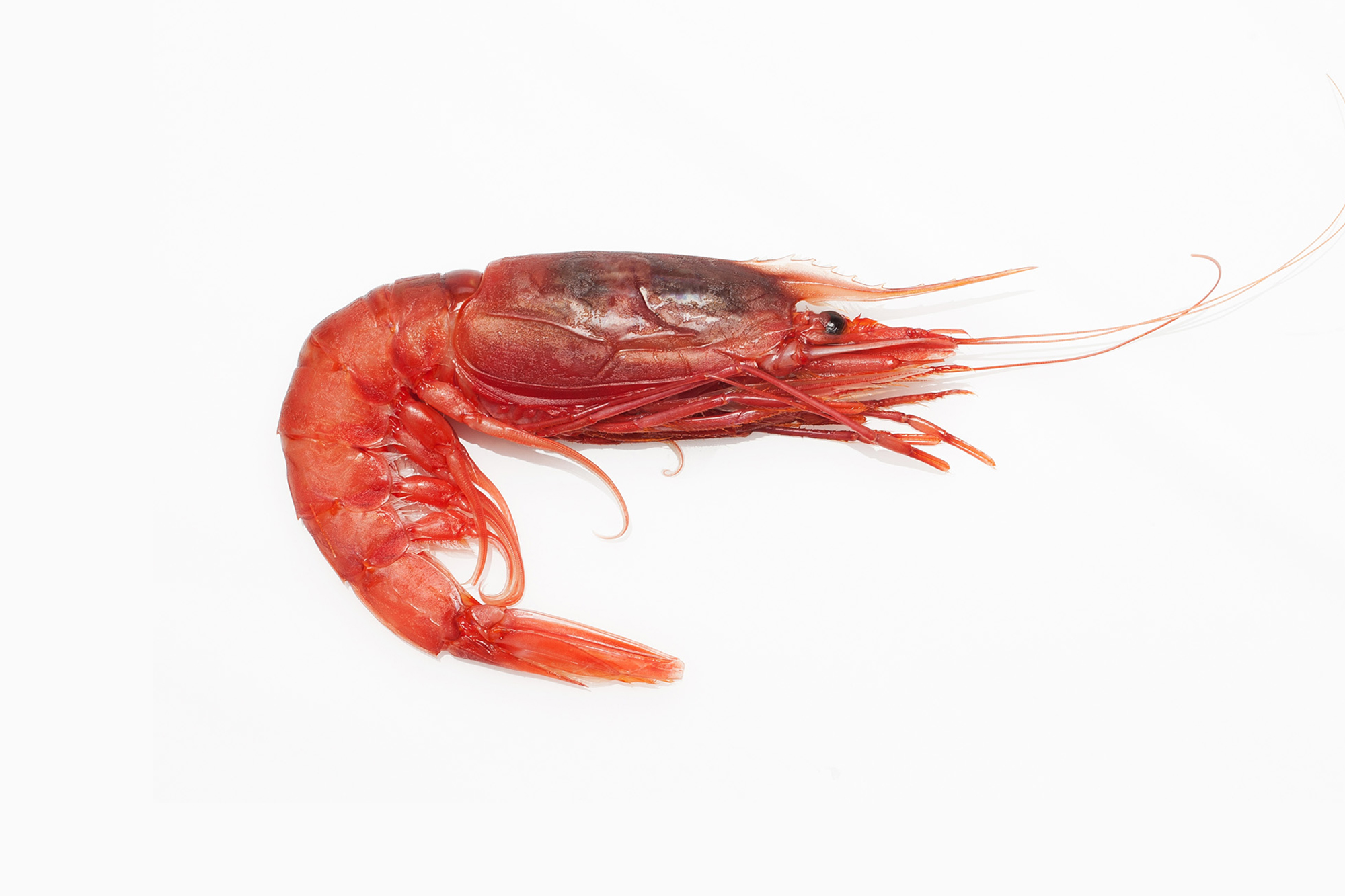 Crevette rouge Image